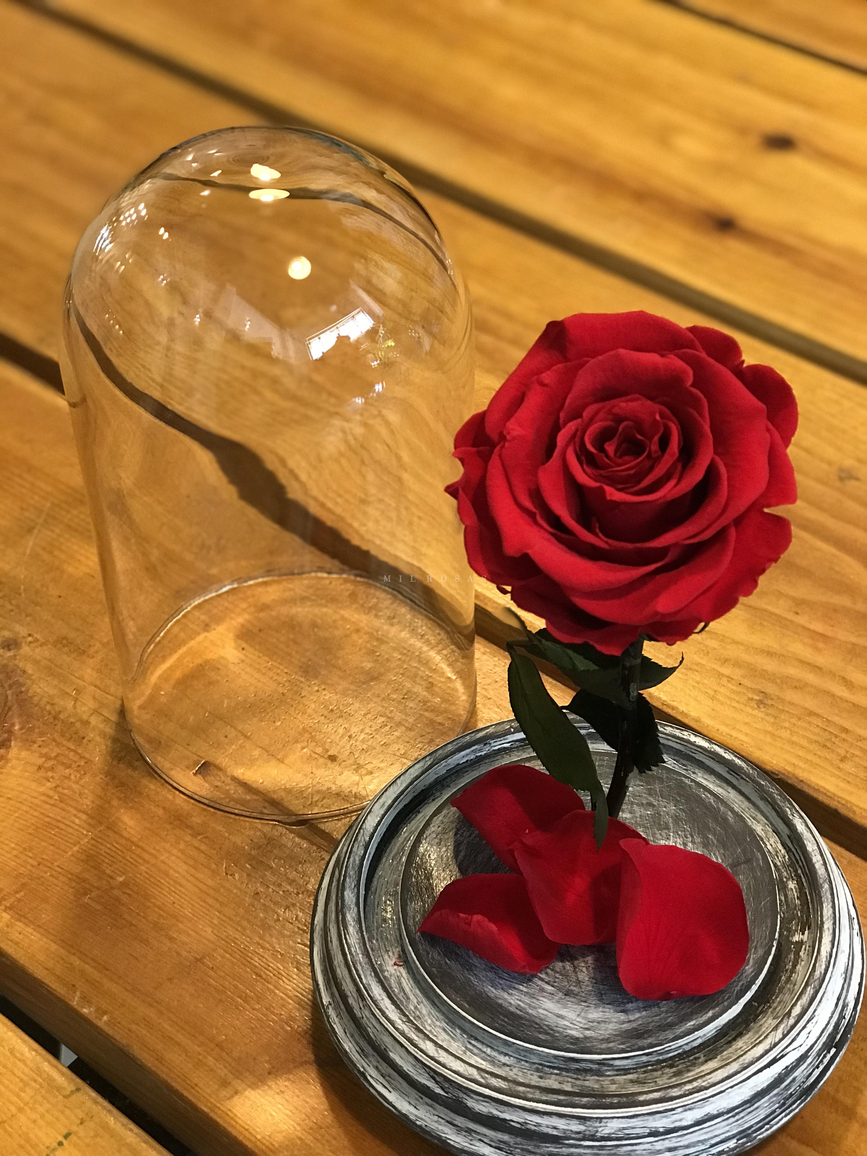 Rosa Eterna Blog Milrosas